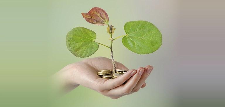 mão planta moedas materia cbio.jpg